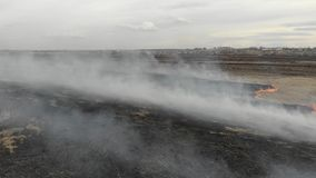burning torrt fältgräs Katastrof och nöd- händelser, negativ inverkan på naturen lager videofilmer