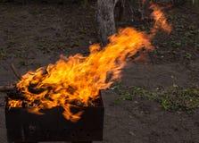 burning trä för brazier Stark brand i gallret royaltyfri foto