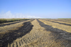 burning track in paddy field Stock Photo