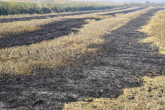 burning track in paddy field Royalty Free Stock Photography