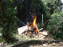 Burning trash in the tropics. A smoky blaze in a bushy garden in the caribbean stock footage