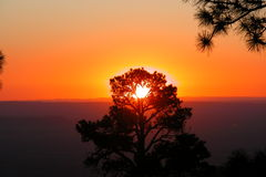 Burning Tree. Burning effect from sunrise through ponderosa pine tree at Grand Canyon Stock Photo