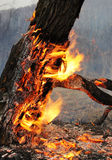 Burning tree Stock Photo