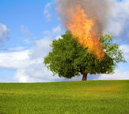 Burning tree Stock Photography
