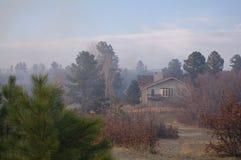 Burning Tree Fire Stock Photography