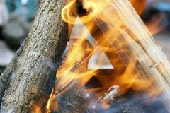 Burning tree in the grill. Bonfire on the grill with smoke. Arson or natural disaster. Bonfire close. Fire in nature. Campfire. Burning tree in the grill royalty free stock images