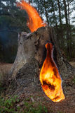 Burning tree stump Stock Image