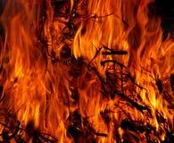 Burning Tree in Time Lapse Royalty Free Stock Photos