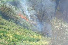 Burning Vegetation in Madeira Royalty Free Stock Photo