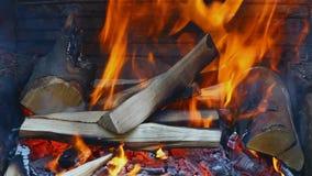 Burning wood stock video