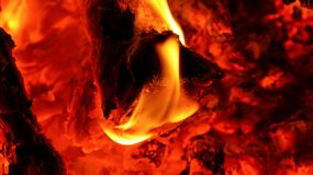 Burning wood in a campfire. Coal and Ash royalty free stock photos
