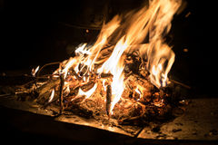Burning wood in campfire. At night stock photos
