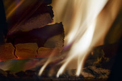 Burning wood and cinder Royalty Free Stock Photo