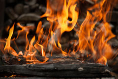 Burning wood in fire. Close-up Stock Images