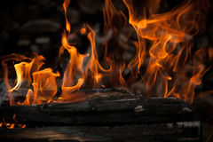 Burning wood in fire. Close-up Royalty Free Stock Image