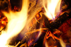 Burning wood from the tree. Royalty Free Stock Photography