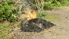 Burning of yard waste, burning rubbish, burn grass stock video footage