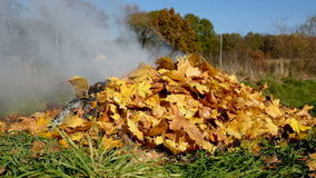 Burning yellow autumn leaves stock footage