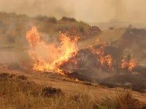 Burning Yucca plant Royalty Free Stock Images