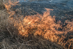 Burns dry grass. The fire in the floodplain of the river, strong wind Stock Photos