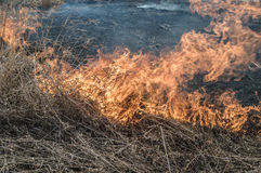 Burns dry grass. The fire in the floodplain of the river, strong wind Royalty Free Stock Photo