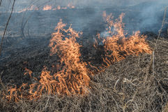 Burns dry grass. The fire in the floodplain of the river, strong wind Royalty Free Stock Photos
