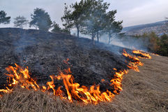 Burns dry grass not mown. The real environmental disaster and spring is not arson dry cut grass that grew around settlements Stock Photography