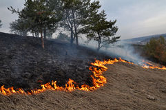 Burns dry grass not mown_2. The real environmental disaster and spring is not arson dry cut grass that grew around settlements Stock Image