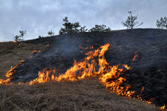 Burns dry grass not mown_4. The real environmental disaster and spring is not arson dry cut grass that grew around settlements Royalty Free Stock Photography