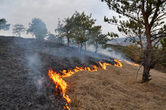 Burns dry grass not mown_7. The real environmental disaster and spring is not arson dry cut grass that grew around settlements Stock Image