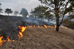 Burns dry grass not mown_9. The real environmental disaster and spring is not arson dry cut grass that grew around settlements Royalty Free Stock Photos