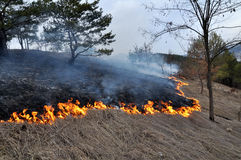 Burns dry grass not mown_20. The real environmental disaster and spring is not arson dry cut grass that grew around settlements Stock Photo