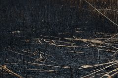 After the burnt ashes of reeds. Texture Stock Photos