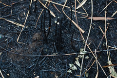 After the burnt ashes of reeds. Texture Stock Photo