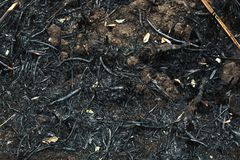 After the burnt ashes of reeds. Texture horizontal image dark tone Stock Photography