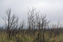 Burnt bushes Stock Photo