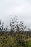 Burnt bushes Stock Images