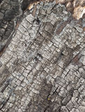 Burnt cracked wood texture. Stock Image