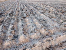 Burnt cultivated field with furrows prepared for next plantation Royalty Free Stock Image
