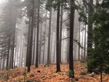 Burnt drzewa w lesie w mgle Fotografia Royalty Free