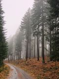 Burnt drzewa w mgle Obraz Royalty Free