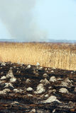 Burnt field Royalty Free Stock Photo