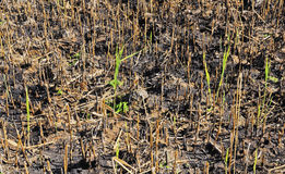 Burnt field Royalty Free Stock Image