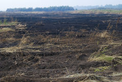 Burnt field. Meadow after fire. Russia, natural disaster Stock Image