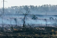 Burnt field, smoke after a fire, burnt trees Royalty Free Stock Photos
