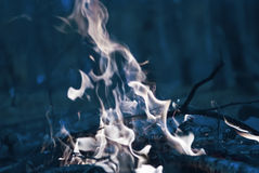 Burnt fire. In forest at night Stock Image