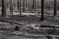Burnt forest Royalty Free Stock Photography