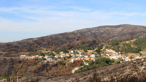 Burnt forest around village in Portugal Royalty Free Stock Photography