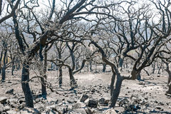 Burnt forest in the countryside from Portugal. Europe Stock Photos