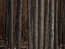 Burnt forest Stock Images